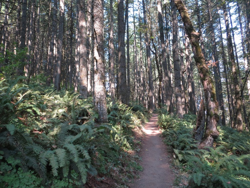 A path extends into a dense forest of conifers and ferns.